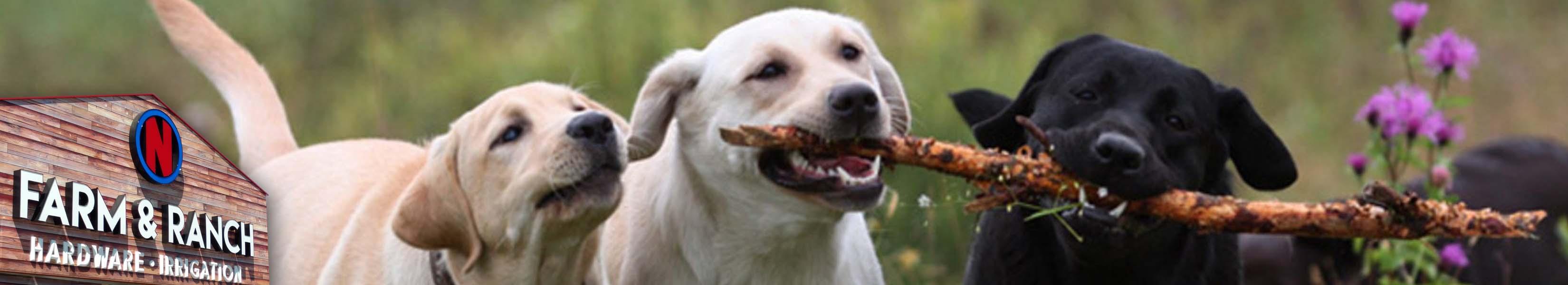 Dog Food & Supplies